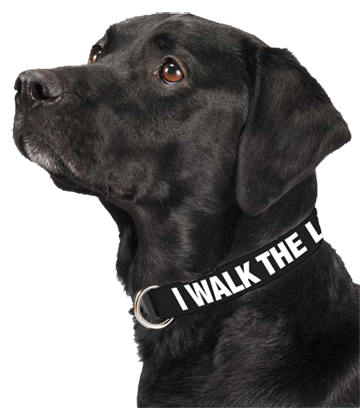 I Walk the Line Dog Collar
